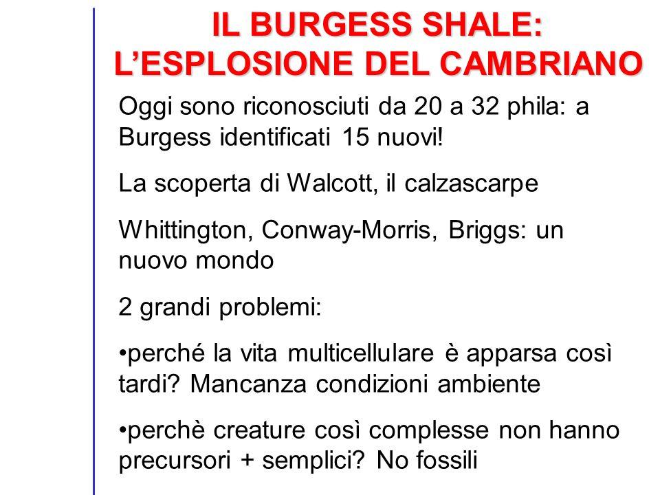 IL BURGESS SHALE: L'ESPLOSIONE DEL CAMBRIANO