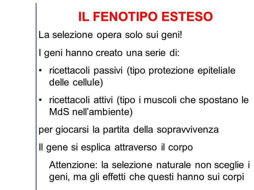 IL FENOTIPO ESTESO La selezione opera solo sui geni!