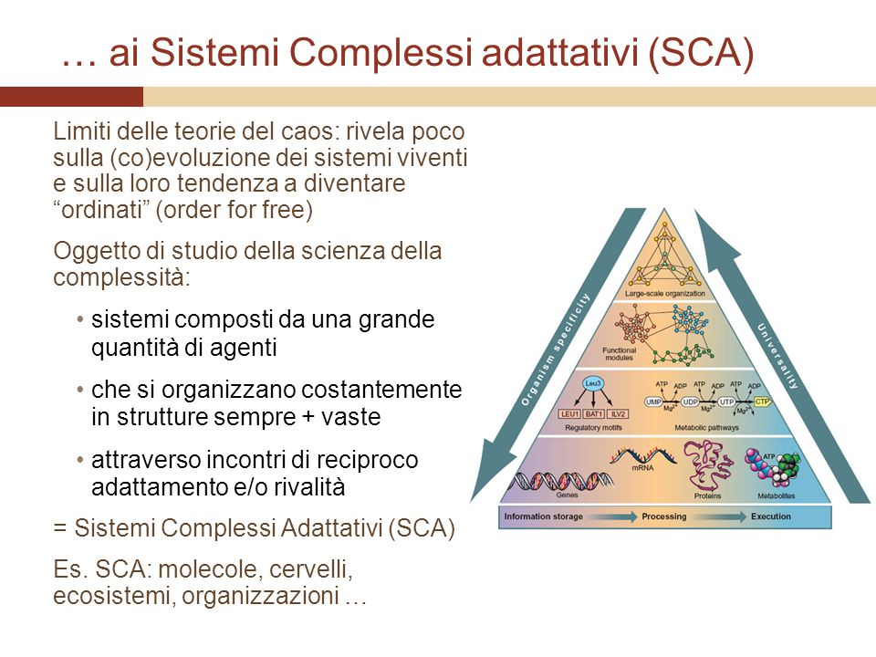 … ai Sistemi Complessi adattativi (SCA)