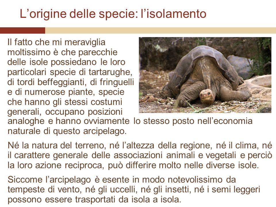L'origine delle specie: l'isolamento