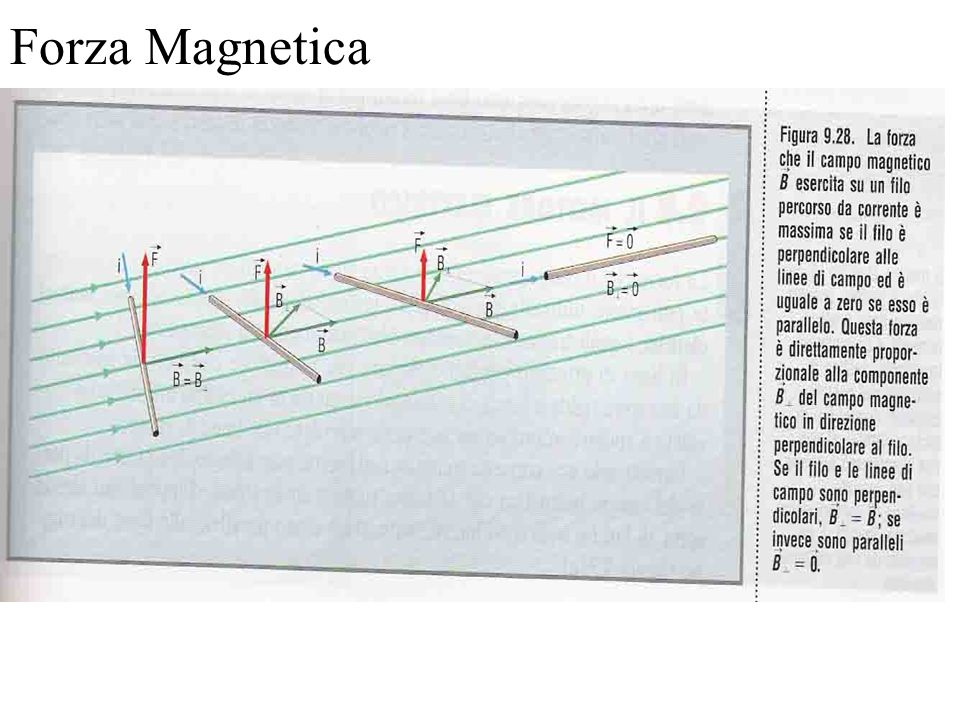 Forza Magnetica