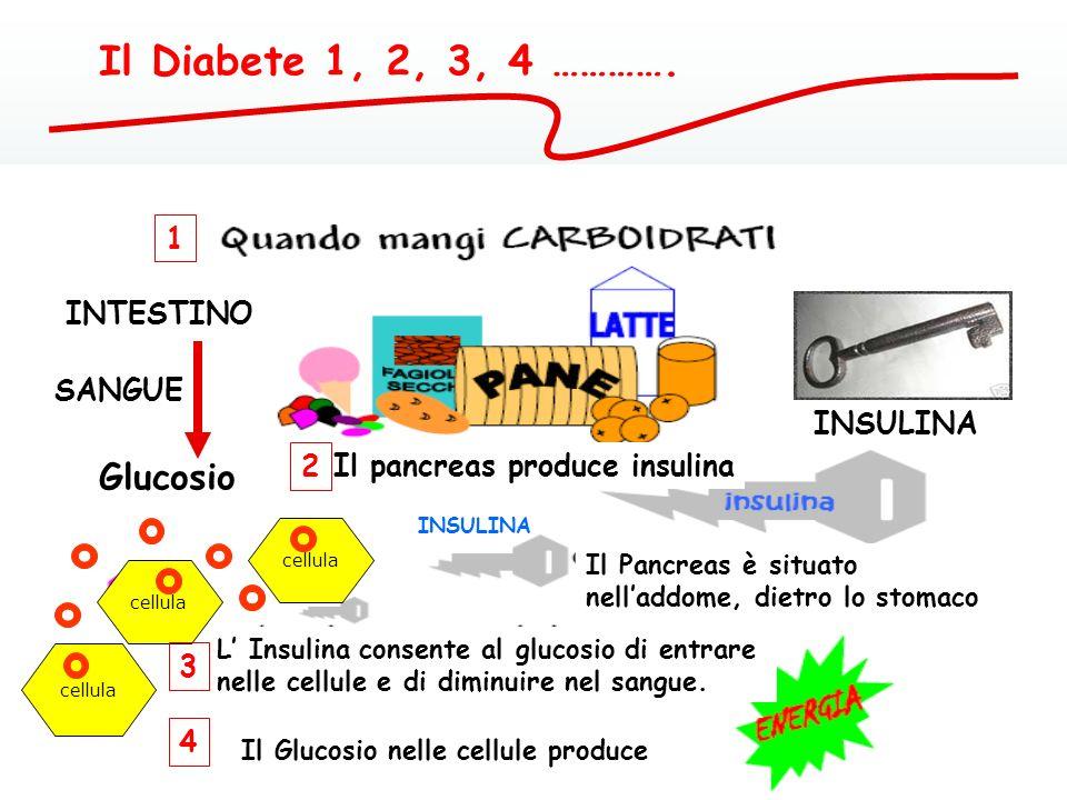 Il pancreas produce insulina