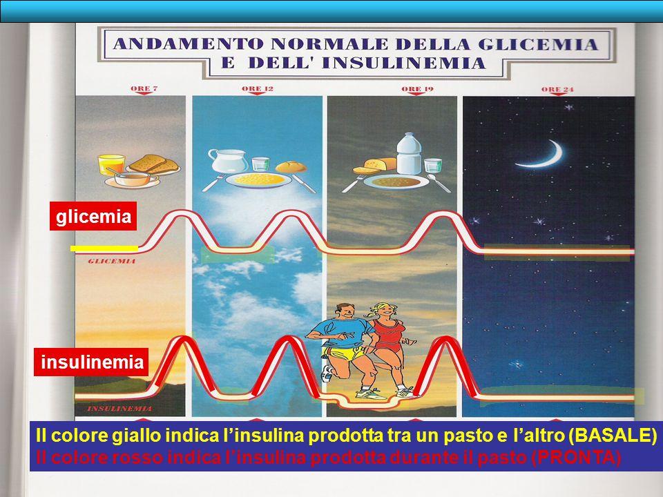 glicemiainsulinemia. Il colore giallo indica l'insulina prodotta tra un pasto e l'altro (BASALE)