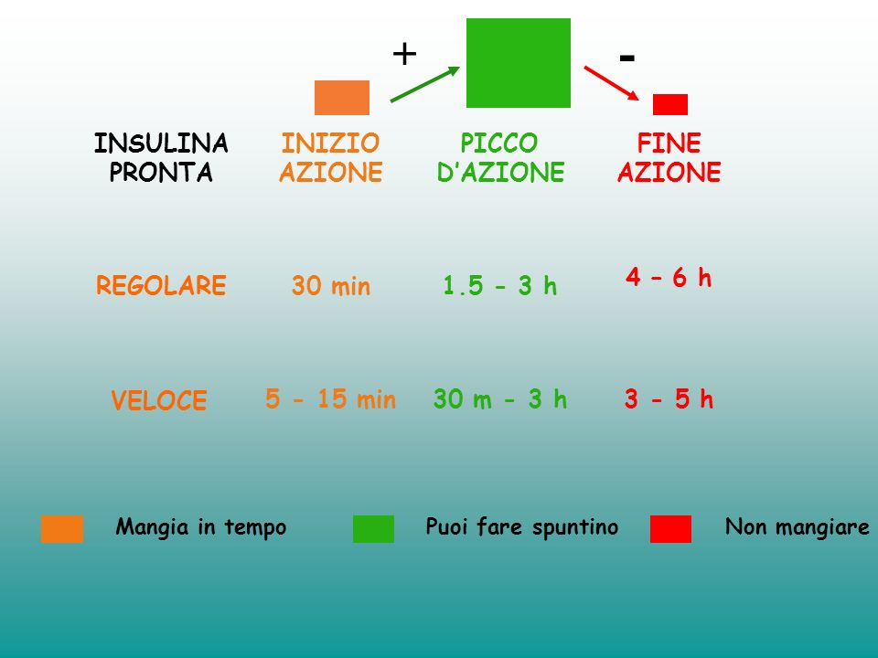 - + INSULINA PRONTA INIZIO AZIONE PICCO D'AZIONE FINE AZIONE REGOLARE