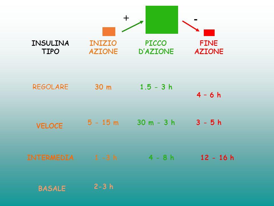 + - INSULINA TIPO INIZIO AZIONE PICCO D'AZIONE FINE AZIONE REGOLARE
