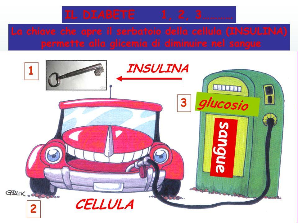 sangue glucosio CELLULA IL DIABETE 1, 2, 3………… INSULINA 1 3 2