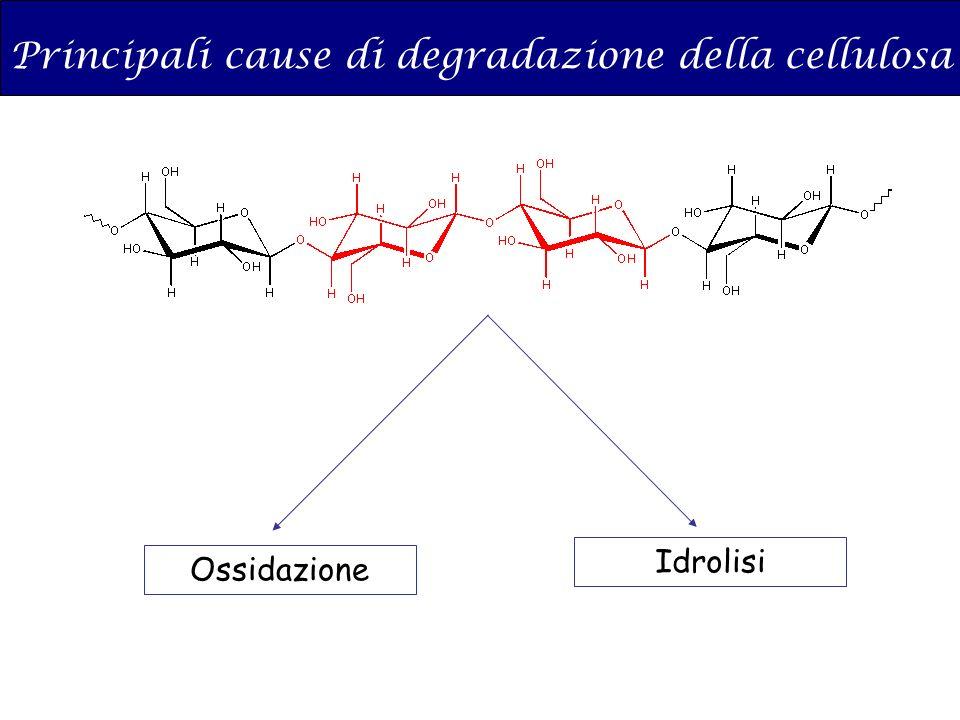 Principali cause di degradazione della cellulosa
