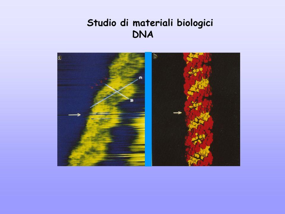 Studio di materiali biologici