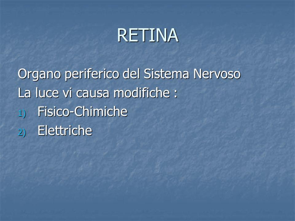 RETINA Organo periferico del Sistema Nervoso