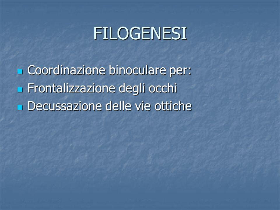 FILOGENESI Coordinazione binoculare per: Frontalizzazione degli occhi