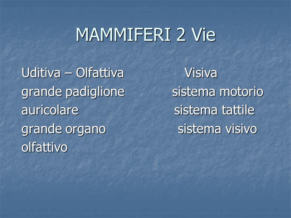 MAMMIFERI 2 Vie Uditiva – Olfattiva Visiva