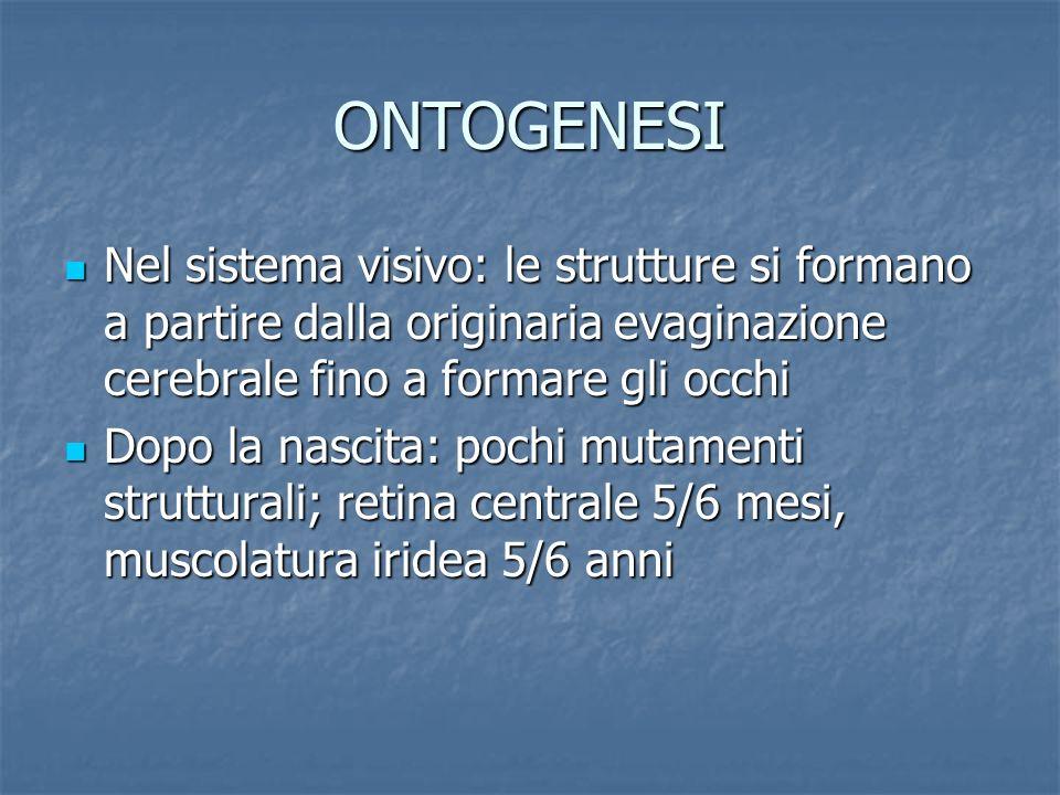 ONTOGENESI Nel sistema visivo: le strutture si formano a partire dalla originaria evaginazione cerebrale fino a formare gli occhi.