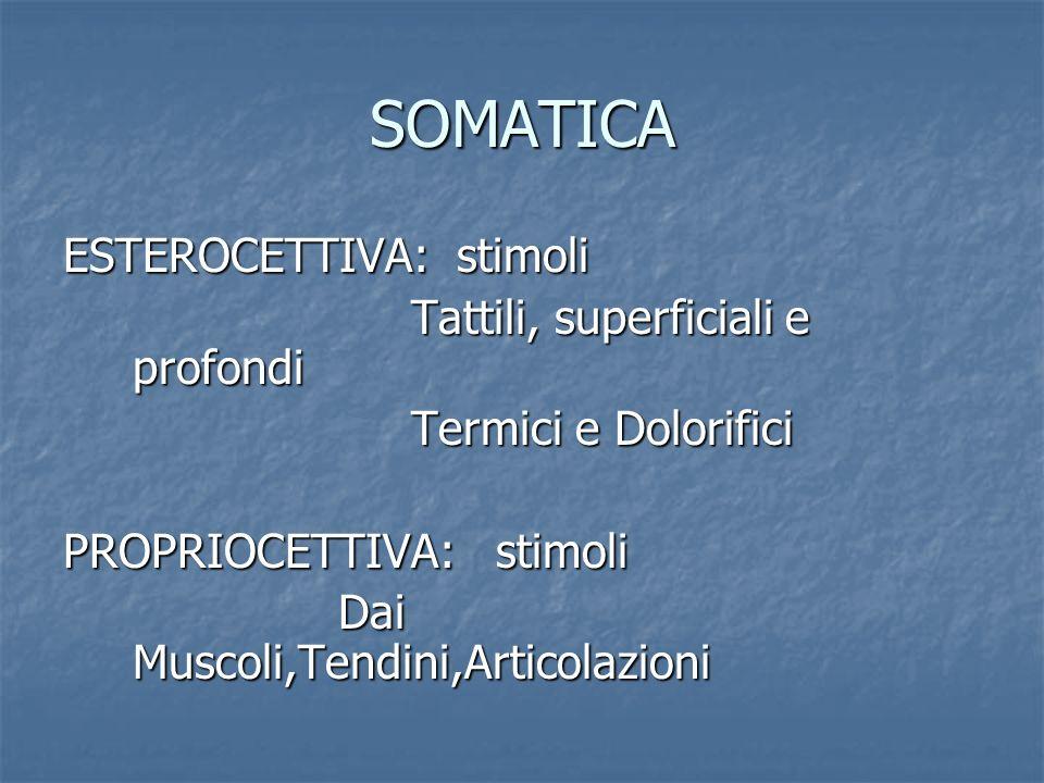 SOMATICA ESTEROCETTIVA: stimoli Tattili, superficiali e profondi