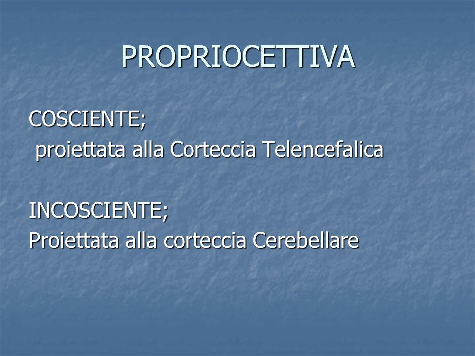 PROPRIOCETTIVA COSCIENTE; proiettata alla Corteccia Telencefalica