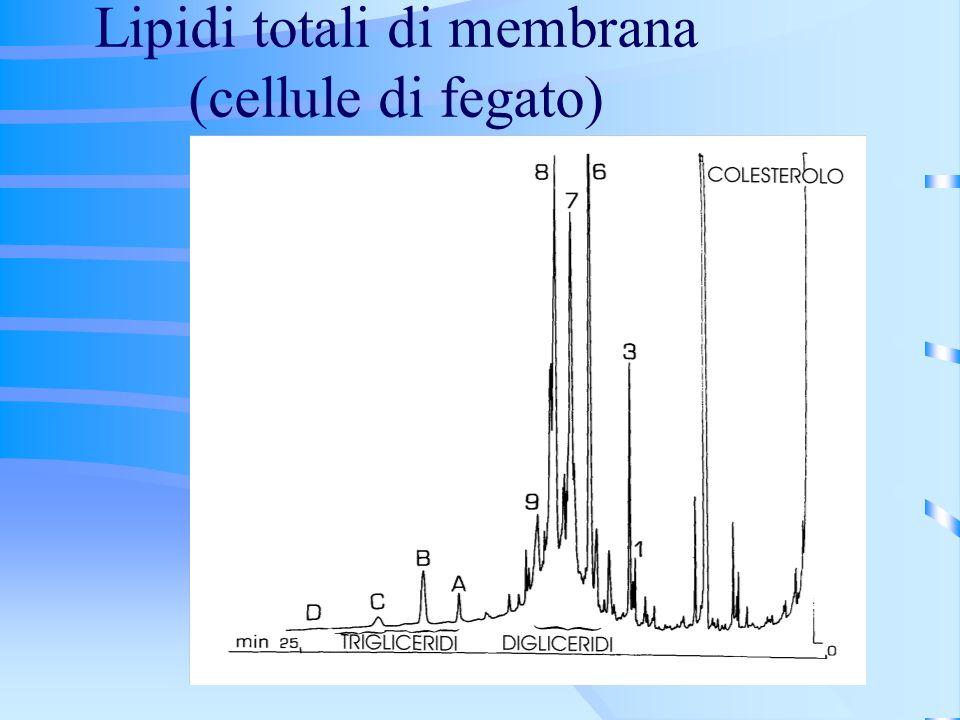 Lipidi totali di membrana (cellule di fegato)