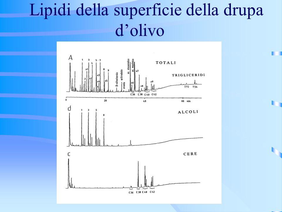 Lipidi della superficie della drupa d'olivo