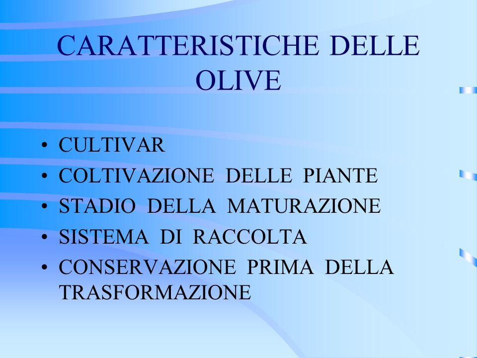 CARATTERISTICHE DELLE OLIVE