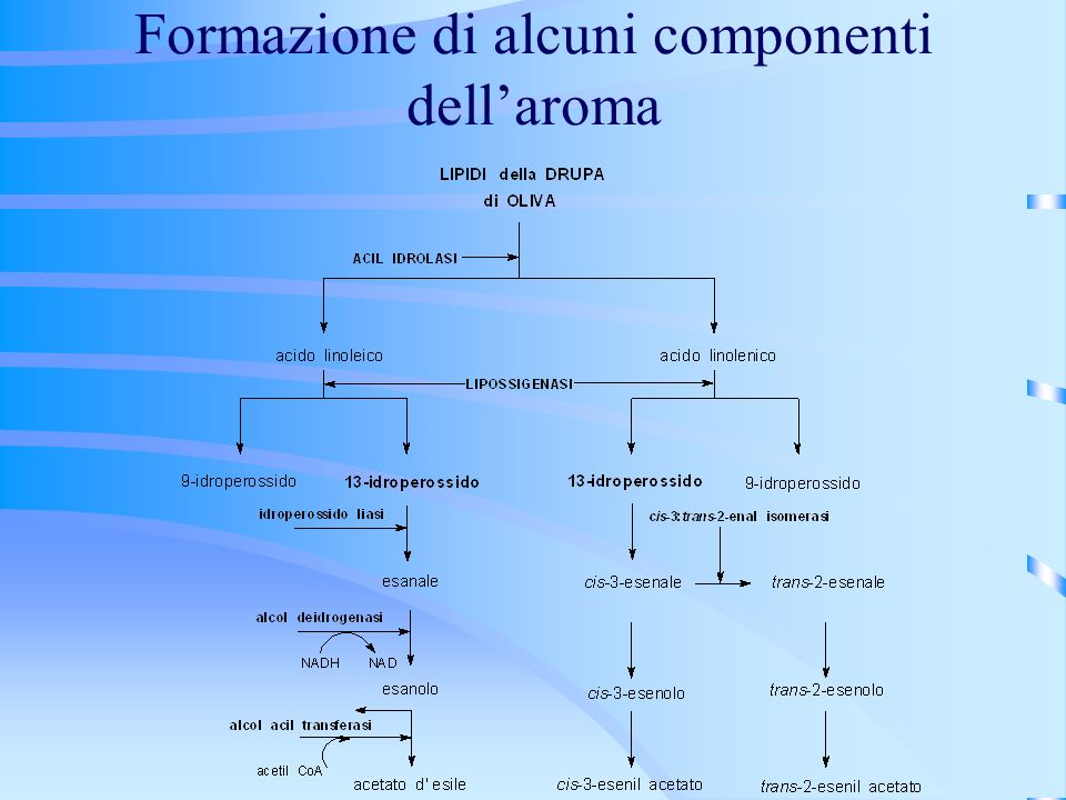 Formazione di alcuni componenti dell'aroma