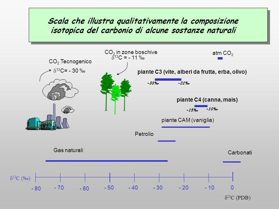 Scala che illustra qualitativamente la composizione isotopica del carbonio di alcune sostanze naturali