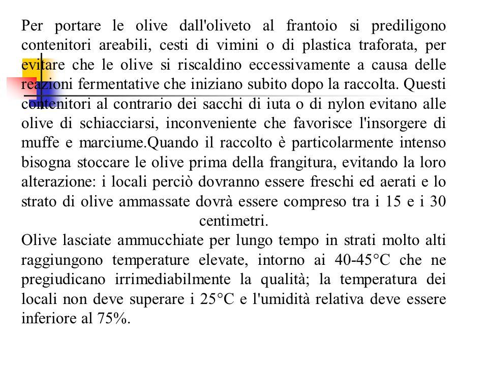 Per portare le olive dall oliveto al frantoio si prediligono contenitori areabili, cesti di vimini o di plastica traforata, per evitare che le olive si riscaldino eccessivamente a causa delle reazioni fermentative che iniziano subito dopo la raccolta.