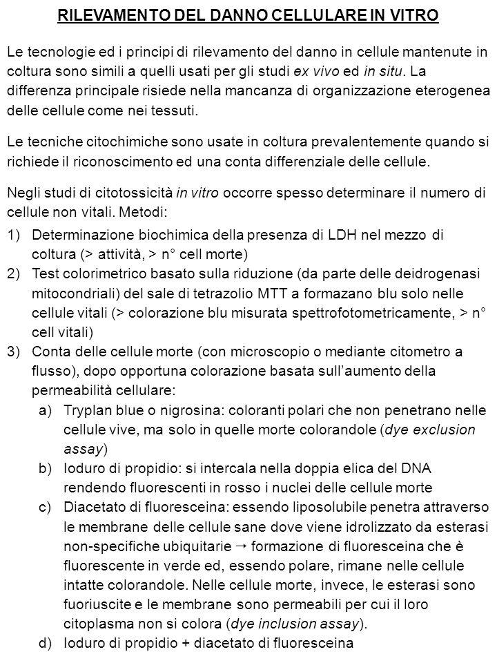RILEVAMENTO DEL DANNO CELLULARE IN VITRO