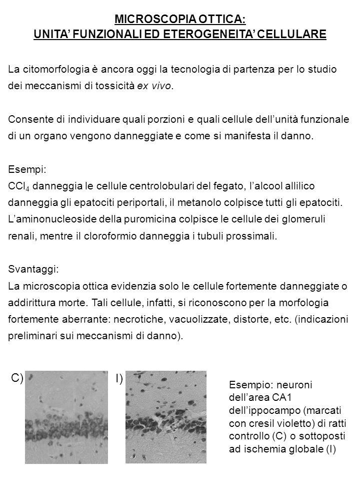 UNITA' FUNZIONALI ED ETEROGENEITA' CELLULARE