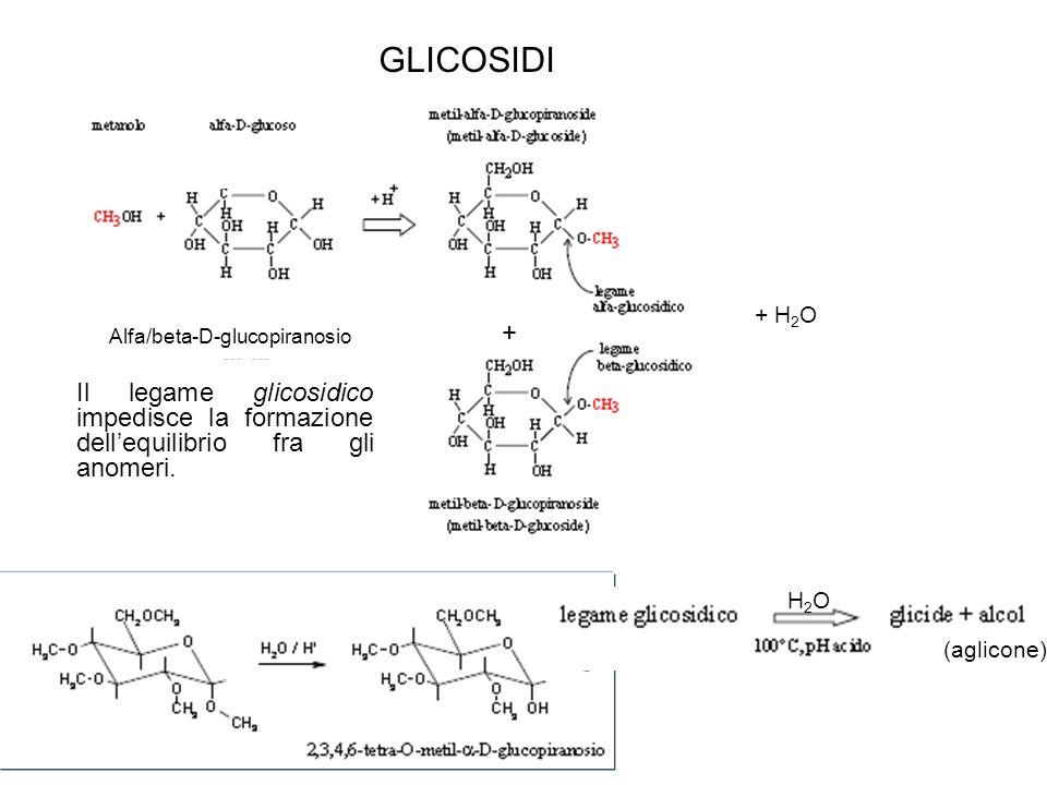 GLICOSIDI + H2O. + Alfa/beta-D-glucopiranosio. Il legame glicosidico impedisce la formazione dell'equilibrio fra gli anomeri.