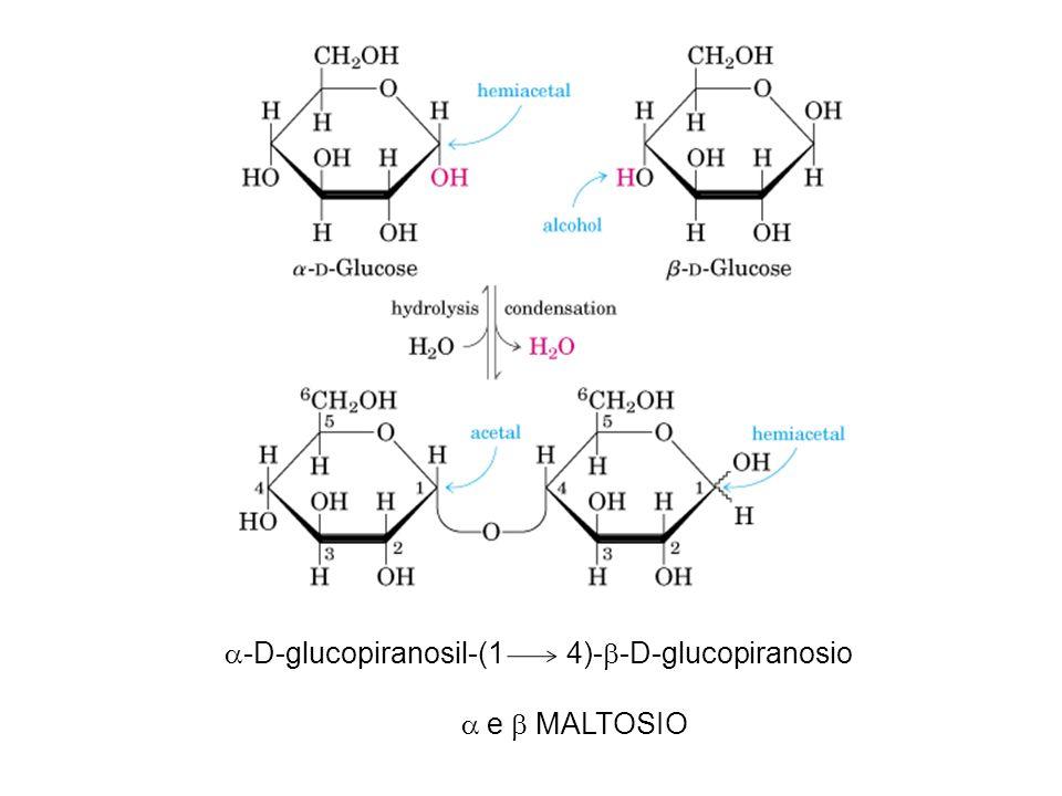 a-D-glucopiranosil-(1 4)-b-D-glucopiranosio