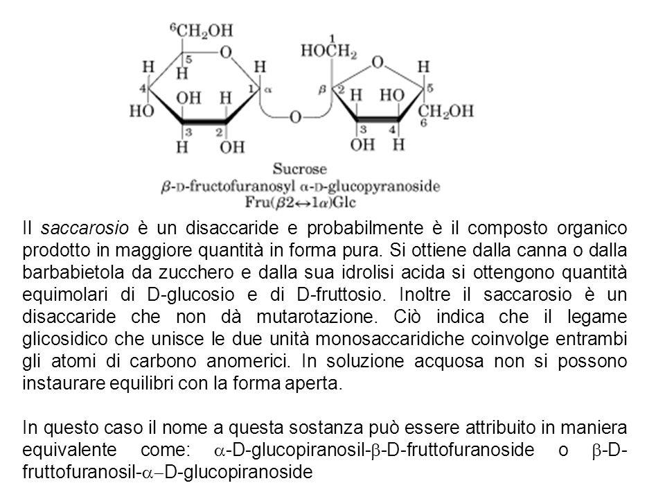Il saccarosio è un disaccaride e probabilmente è il composto organico prodotto in maggiore quantità in forma pura. Si ottiene dalla canna o dalla barbabietola da zucchero e dalla sua idrolisi acida si ottengono quantità equimolari di D-glucosio e di D-fruttosio. Inoltre il saccarosio è un disaccaride che non dà mutarotazione. Ciò indica che il legame glicosidico che unisce le due unità monosaccaridiche coinvolge entrambi gli atomi di carbono anomerici. In soluzione acquosa non si possono instaurare equilibri con la forma aperta.