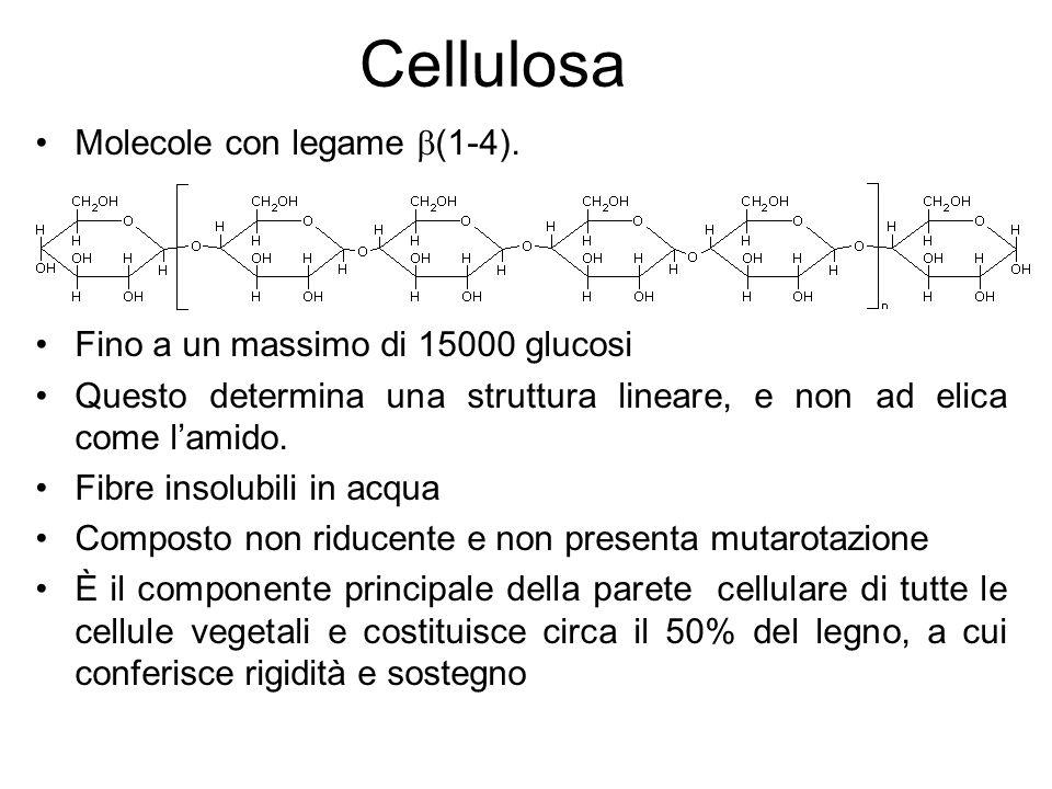 Cellulosa Molecole con legame b(1-4).