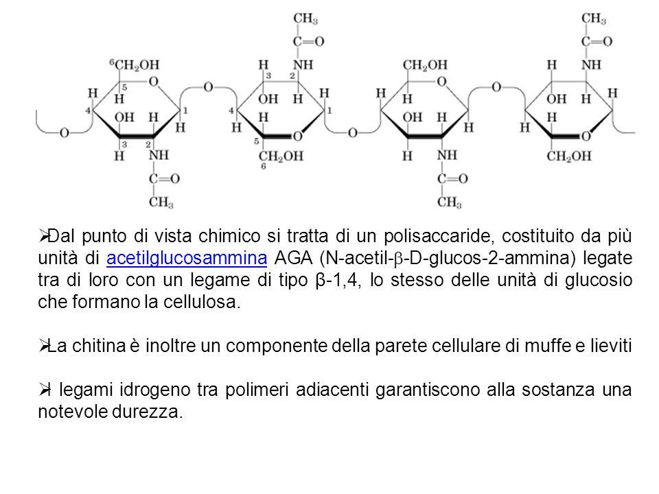 Dal punto di vista chimico si tratta di un polisaccaride, costituito da più unità di acetilglucosammina AGA (N-acetil-b-D-glucos-2-ammina) legate tra di loro con un legame di tipo β-1,4, lo stesso delle unità di glucosio che formano la cellulosa.