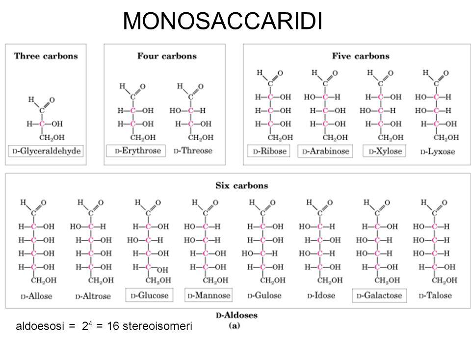 MONOSACCARIDI aldoesosi = 24 = 16 stereoisomeri