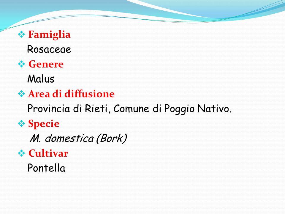 Famiglia Rosaceae. Genere. Malus. Area di diffusione. Provincia di Rieti, Comune di Poggio Nativo.