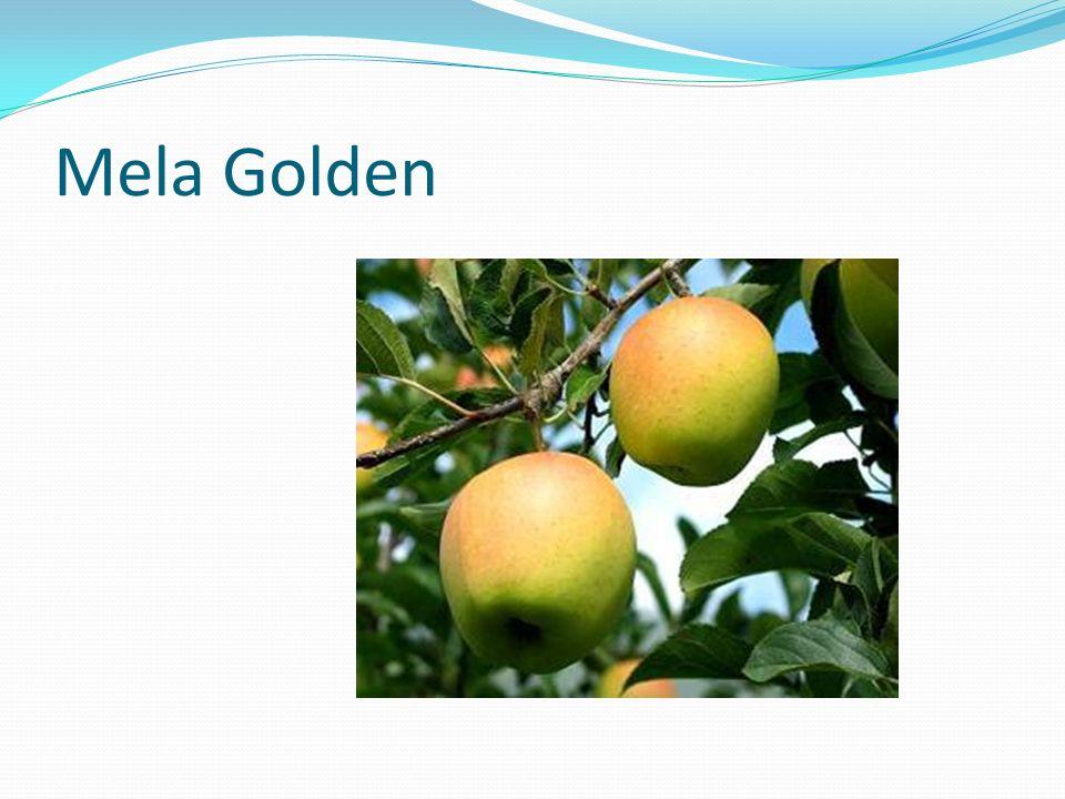 Mela Golden