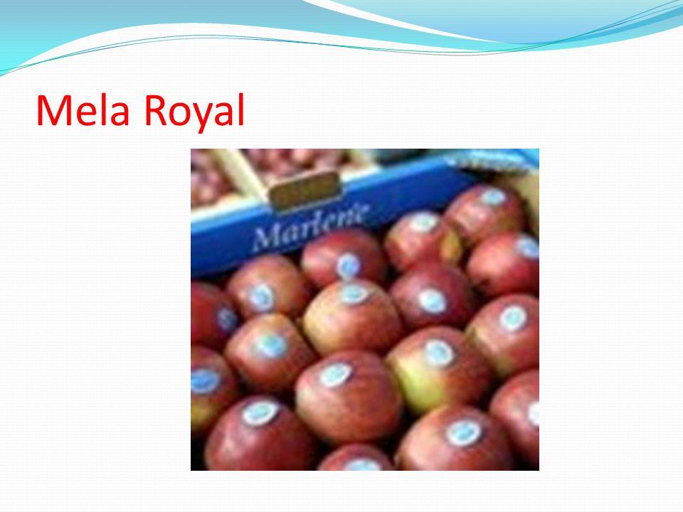 Mela Royal