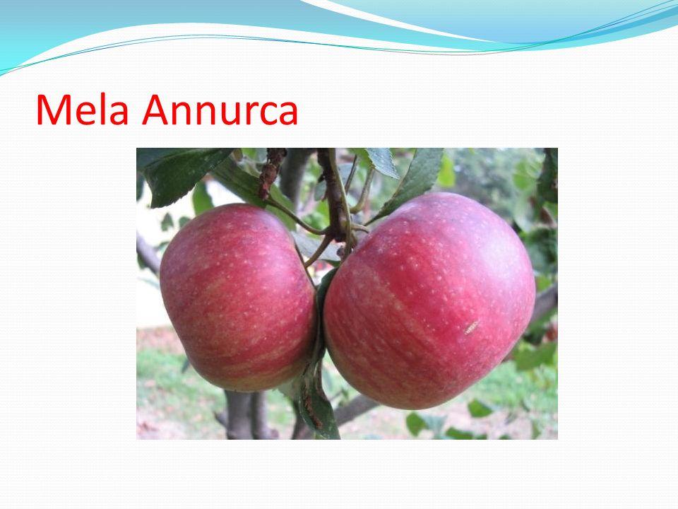 Mela Annurca