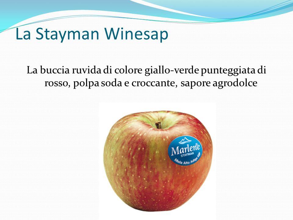 La Stayman Winesap La buccia ruvida di colore giallo-verde punteggiata di rosso, polpa soda e croccante, sapore agrodolce.