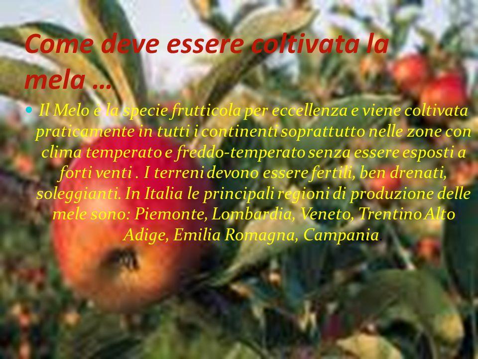 Come deve essere coltivata la mela …