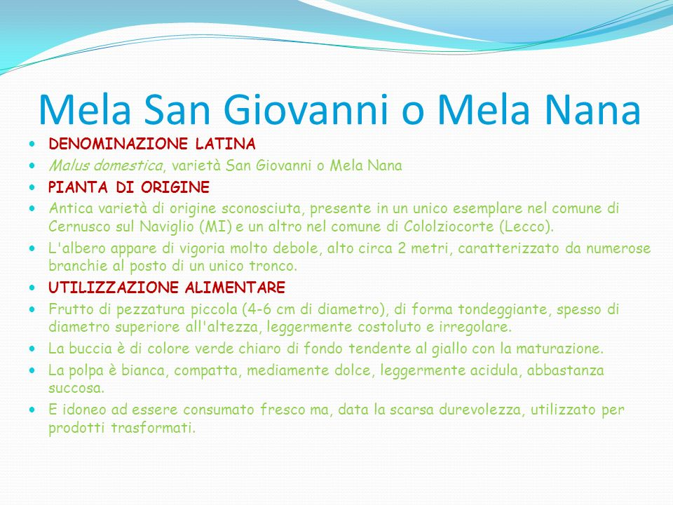 Mela San Giovanni o Mela Nana