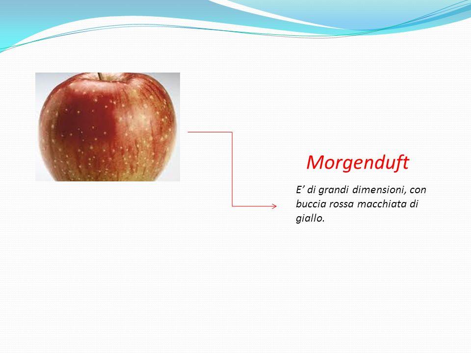 Morgenduft E' di grandi dimensioni, con buccia rossa macchiata di giallo.