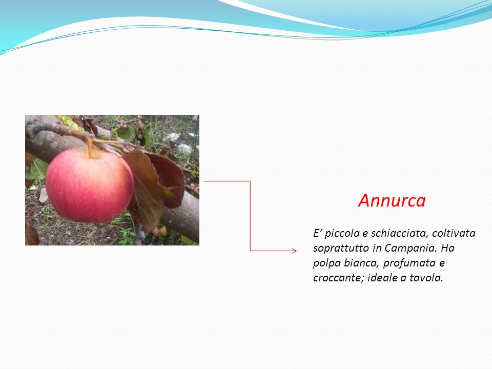 Annurca E' piccola e schiacciata, coltivata soprattutto in Campania.