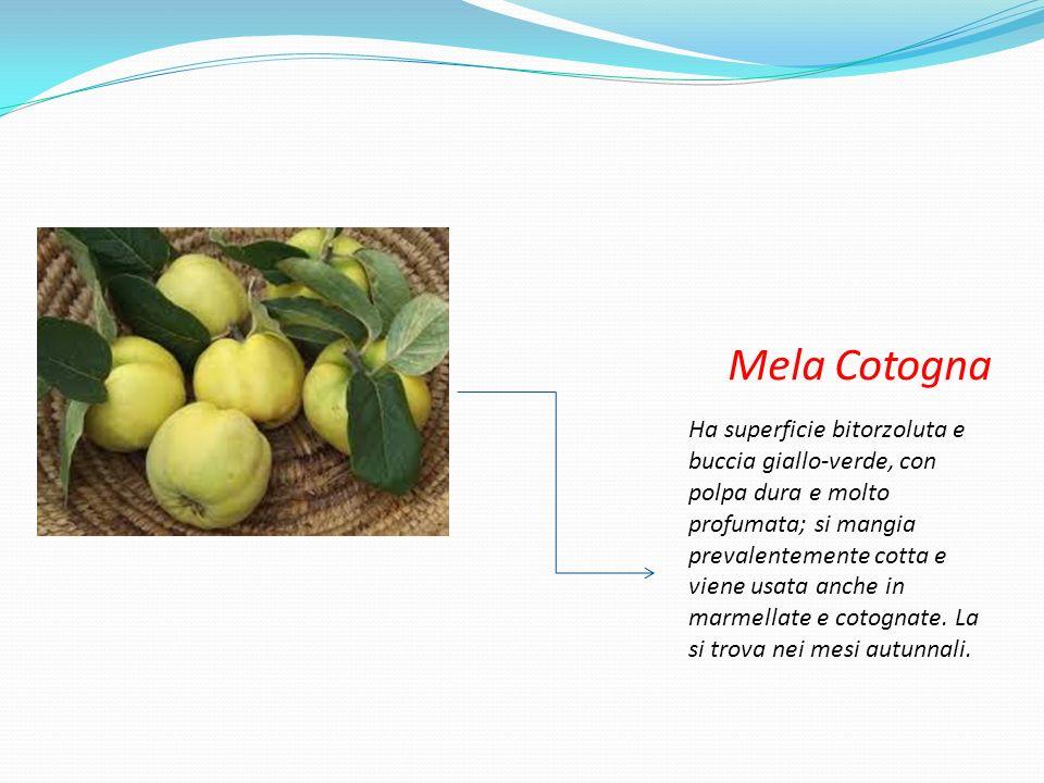 Mela Cotogna