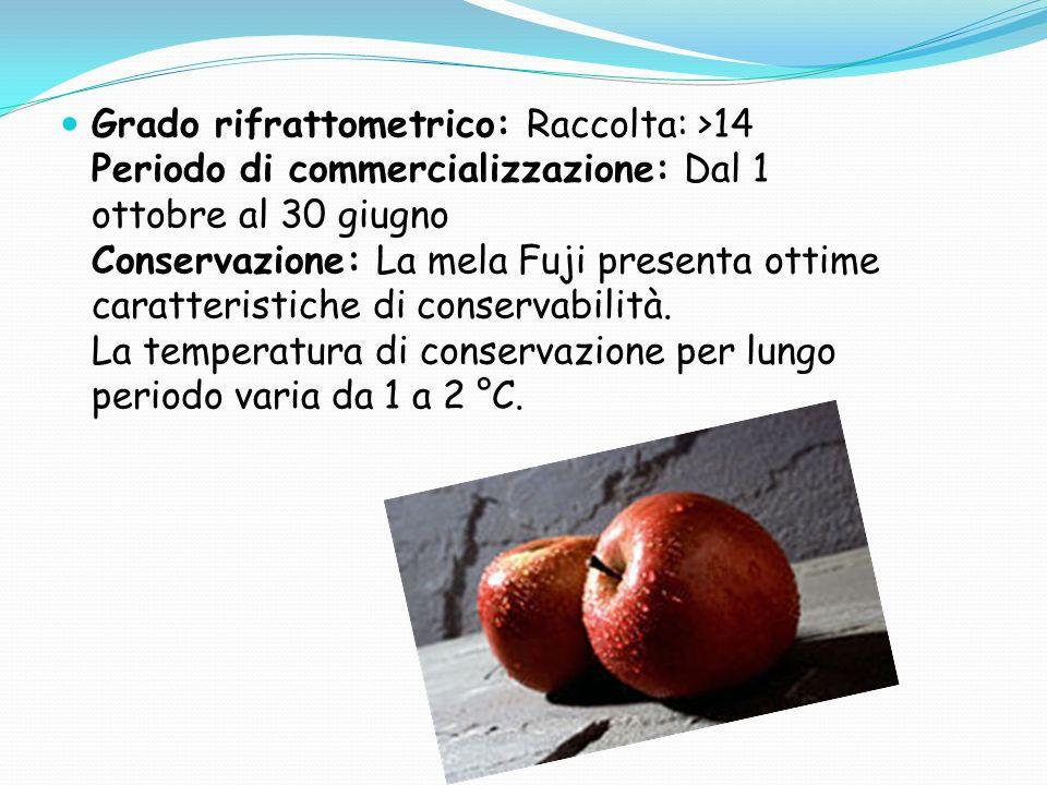 Grado rifrattometrico: Raccolta: >14 Periodo di commercializzazione: Dal 1 ottobre al 30 giugno Conservazione: La mela Fuji presenta ottime caratteristiche di conservabilità.