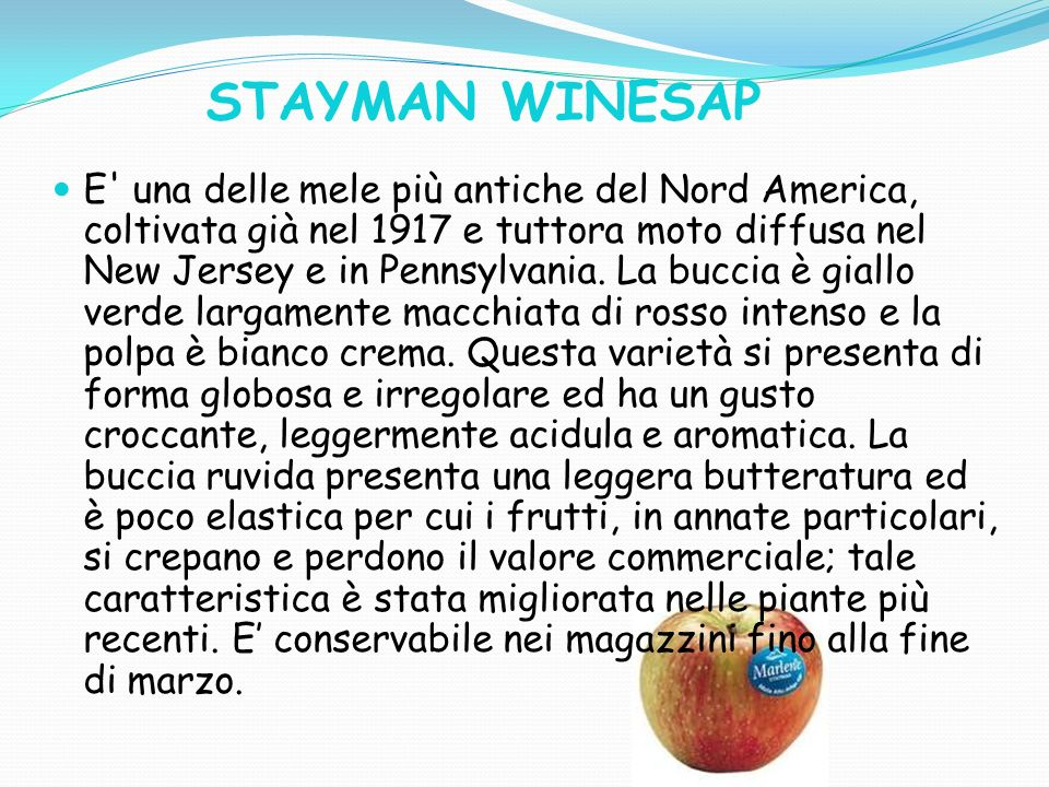 STAYMAN WINESAP