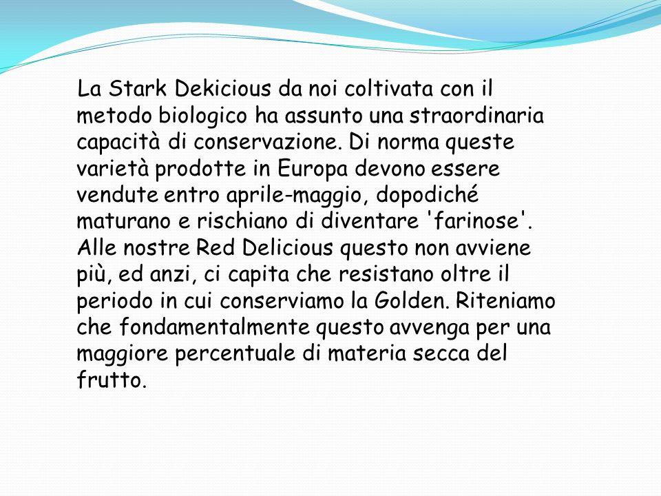 La Stark Dekicious da noi coltivata con il metodo biologico ha assunto una straordinaria capacità di conservazione.