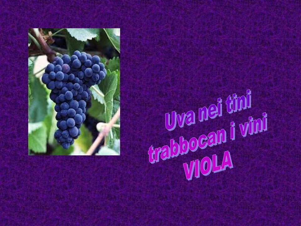 Uva nei tini trabbocan i vini VIOLA
