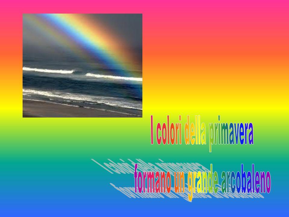 I colori della primavera formano un grande arcobaleno