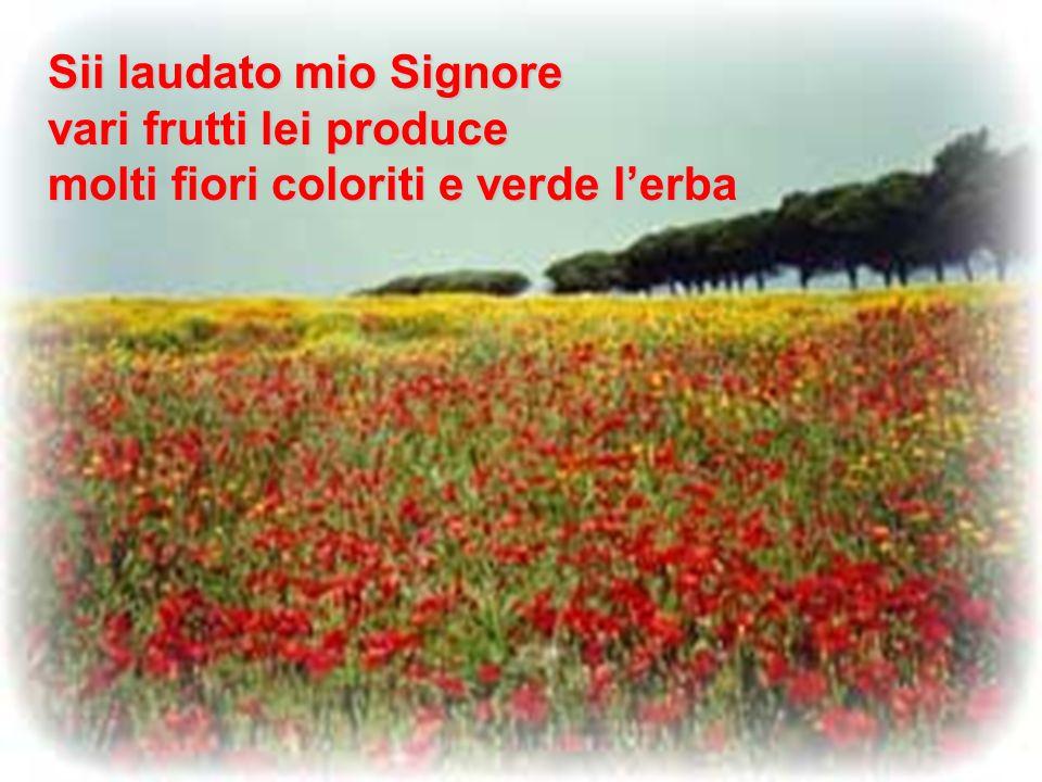 Sii laudato mio Signore vari frutti lei produce molti fiori coloriti e verde l'erba