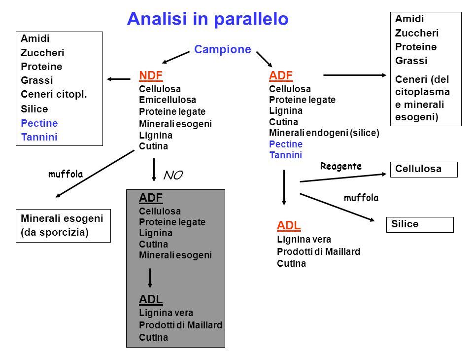 Analisi in parallelo Campione NDF ADF NO ADF ADL ADL Amidi Zuccheri