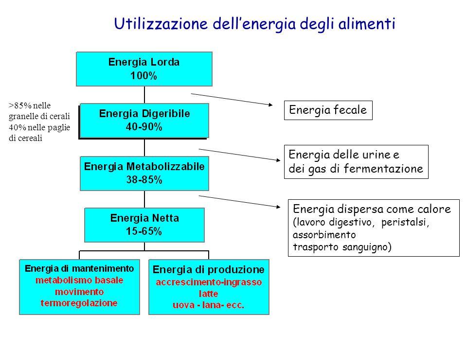 Utilizzazione dell'energia degli alimenti